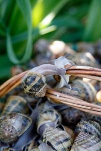 escargots-enlacés
